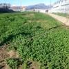 terreno agricolo Albenga